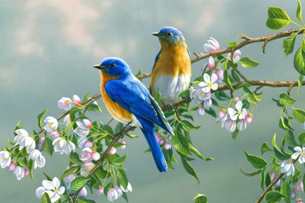 Image - 2 birds on tree