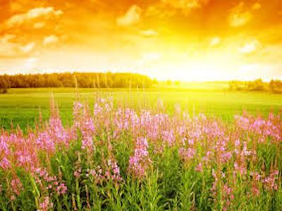 Image - Flower sun