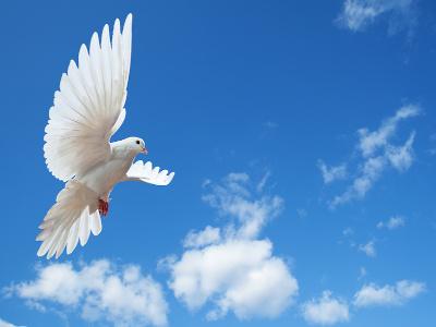 Image - Dove - Colombe